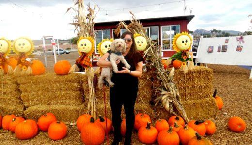 Pumpkin Patch Fun at Stu Miller's in Henderson/Las Vegas