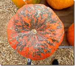 pumpkin patch henderson 3