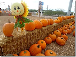 pumpkin patch henderson