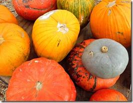 pumpkin patch stu millers henderson
