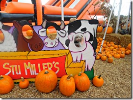 stu millers henderson pumpkin patch