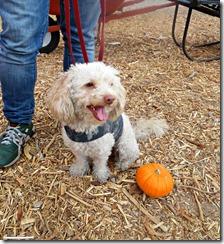 stu millers pumpkin patch
